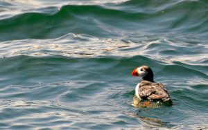 Mountainside Hideaway - Donelda Puffin Boat Tours